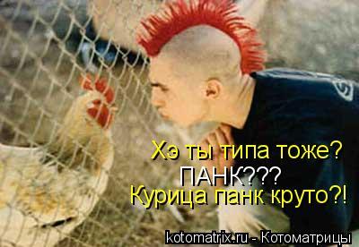 Котоматрица: Хэ ты типа тоже? ПАНК??? Курица панк круто?!