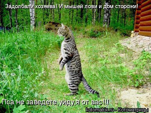 Котоматрица: Задолбали хозяева! И мышей лови и дом сторожи! Пса не заведете,уйду,я от вас!!!