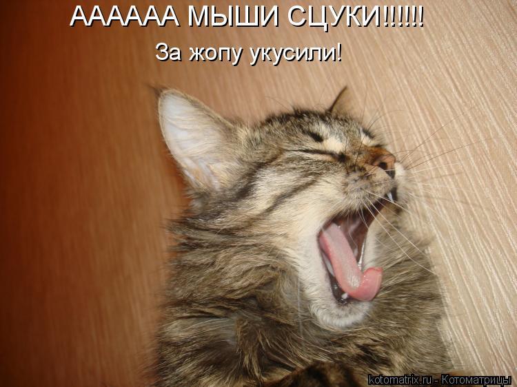 Котоматрица: АААААА МЫШИ СЦУКИ!!!!!! За жопу укусили!