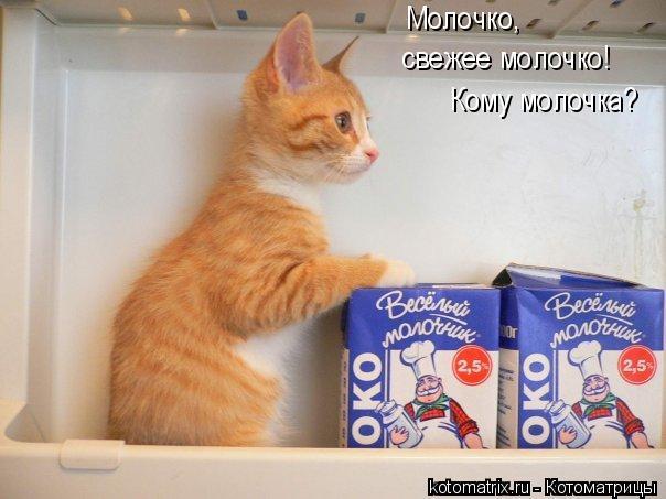 Котоматрица: Молочко,  свежее молочко!  Кому молочка?