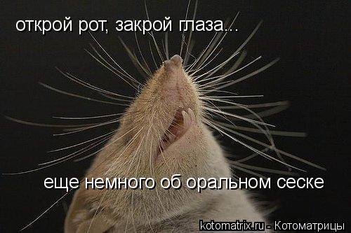 Котоматрица: открой рот, закрой глаза... еще немного об оральном сеске