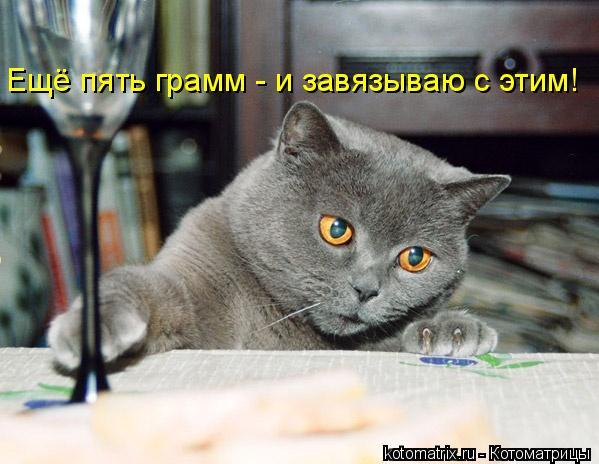 Котоматрица: Ещё пять грамм - и завязываю с этим!
