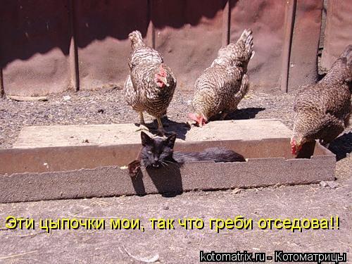 Котоматрица: Эти цыпочки мои, так что греби отседова!!