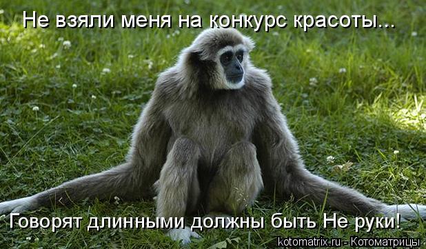 Котоматрица: Не взяли меня на конкурс красоты... Говорят длинными должны быть Не руки!