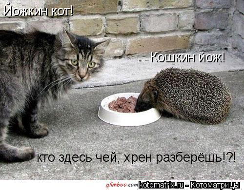 Котоматрица: Йожкин кот!  Кошкин йож! кто здесь чей, хрен разберёшь!?!