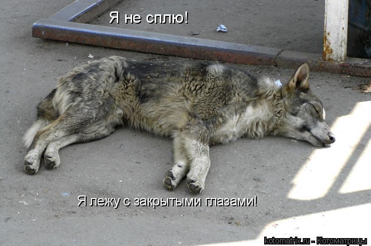 Котоматрица: Я не сплю! Я лежу с закрытыми глазами!