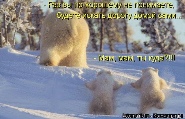Котоматрица: - Мам, мам, ты куда?!!! - Раз вы по-хорошему не понимаете,  будете искать дорогу домой сами...