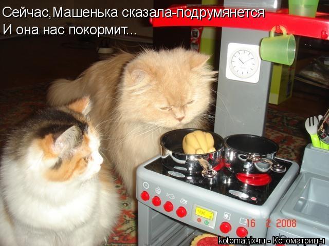 Котоматрица: Сейчас,Машенька сказала-подрумянется И она нас покормит...