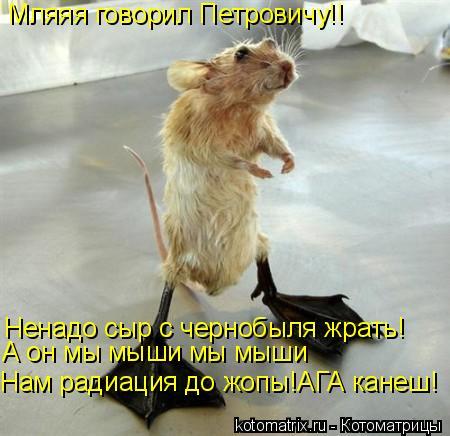 Котоматрица: Мляяя говорил Петровичу!! Ненадо сыр с чернобыля жрать! Нам радиация до жопы!АГА канеш! А он мы мыши мы мыши