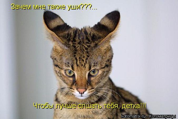 Котоматрица: Зачем мне такие уши???... Чтобы лучше слшать тебя, детка!!!