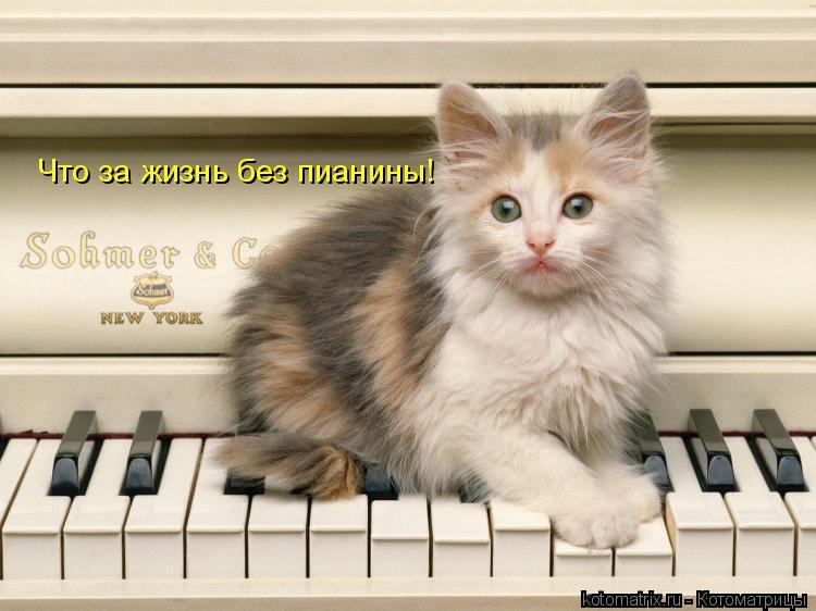 Котоматрица: Что за жизнь без пианины!