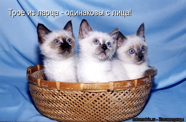 Котоматрица: Трое из ларца - одинаковы с лица!
