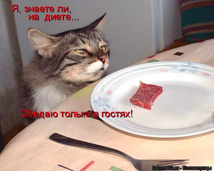 Котоматрица: Я, знаете ли,  на  диете... Обедаю только в гостях!