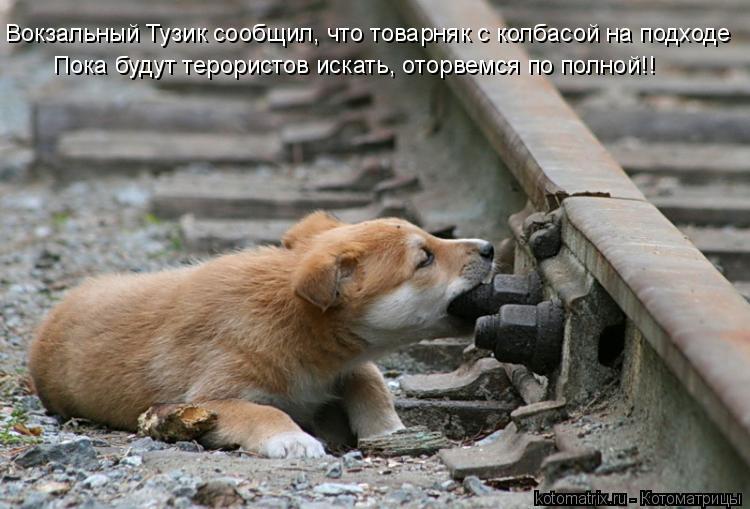 Котоматрица: Вокзальный Тузик сообщил, что товарняк с колбасой на подходе Пока будут терористов искать, оторвемся по полной!!