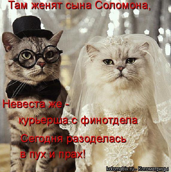 Котоматрица: Там женят сына Соломона, Невеста же -  курьерша с финотдела Сегодня разоделась в пух и прах!