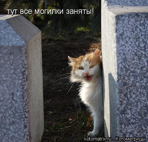 Котоматрица: тут все могилки заняты!