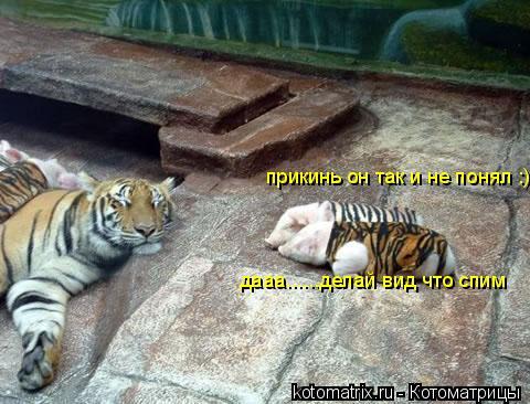 Котоматрица: прикинь он так и не понял :) дааа......делай вид что спим