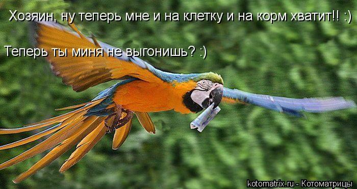 Котоматрица: Хозяин, ну теперь мне и на клетку и на корм хватит!! :) Теперь ты миня не выгонишь? :)