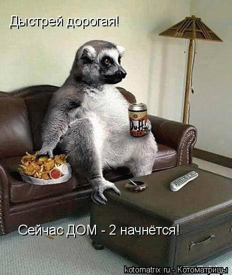 Котоматрица: Дыстрей дорогая! Сейчас ДОМ - 2 начнётся!