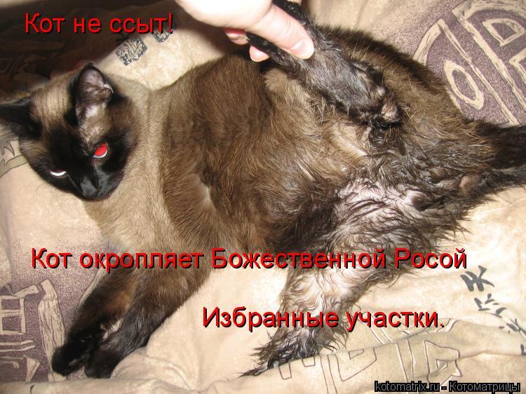 Котоматрица: Кот не ссыт! Кот окропляет Божественной Росой  Избранные участки.