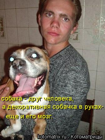 Котоматрица: собака - друг человека, а декоративная собачка в руках- еще и его мозг.