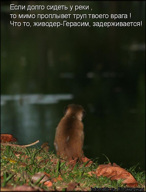 Котоматрица: Если долго сидеть у реки , то мимо проплывет труп твоего врага ! Что то, живодер-Герасим, задерживается!