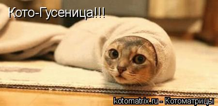 Котоматрица: Кото-Гусеница!!!