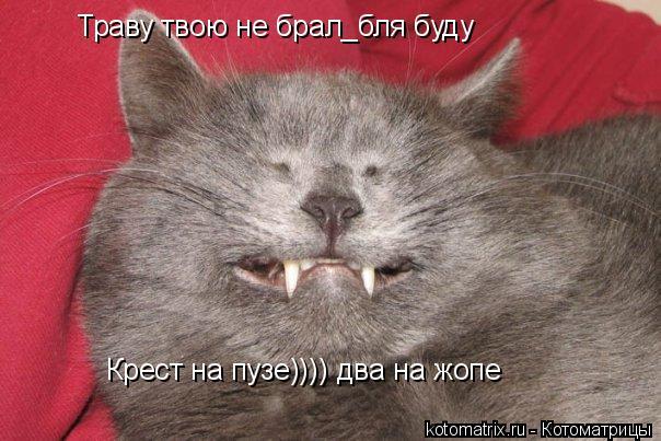 Котоматрица: Траву твою не брал_бля буду Крест на пузе)))) два на жопе