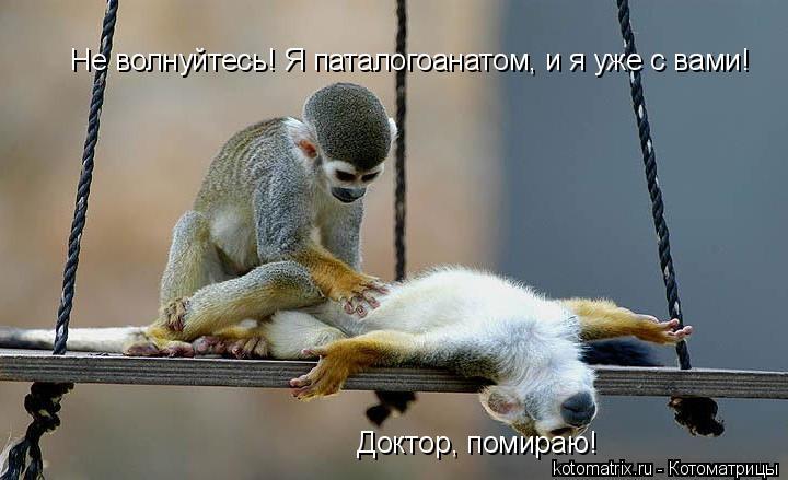 Котоматрица: Доктор, помираю!  Не волнуйтесь! Я паталогоанатом, и я уже с вами!