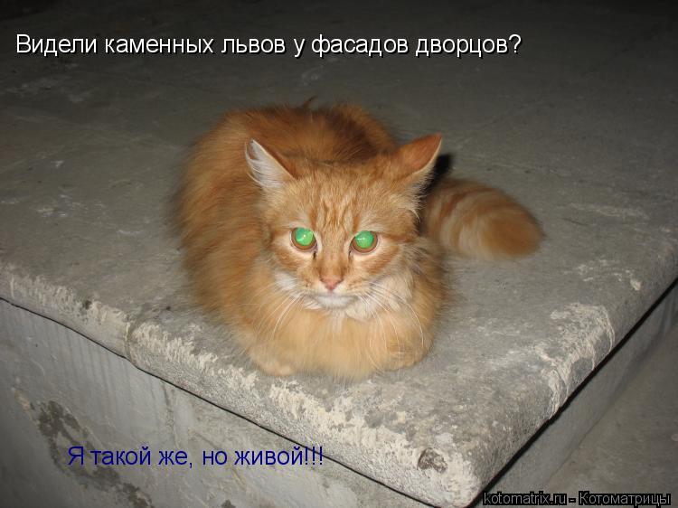 Котоматрица: Видели каменных львов у фасадов дворцов? Я такой же, но живой!!!