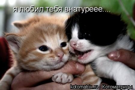 Котоматрица: я любил тебя внатуреее....