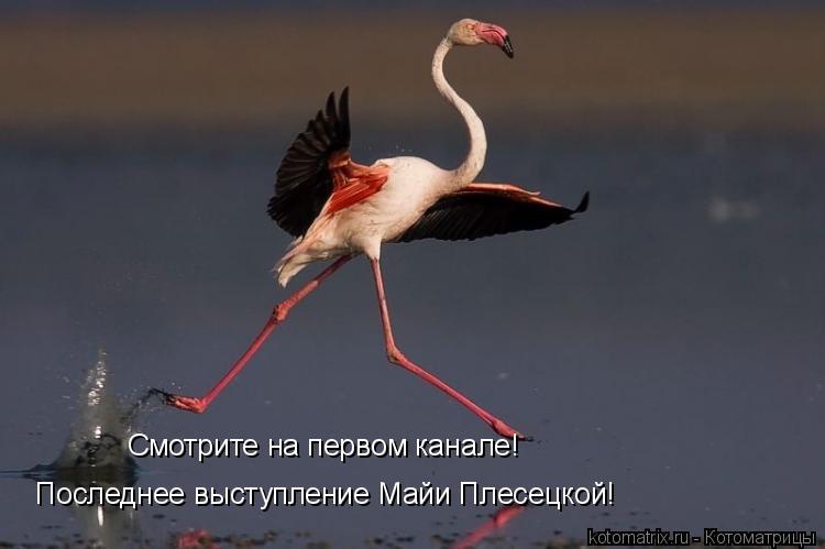 Котоматрица: Смотрите на первом канале!  Последнее выступление Майи Плесецкой!