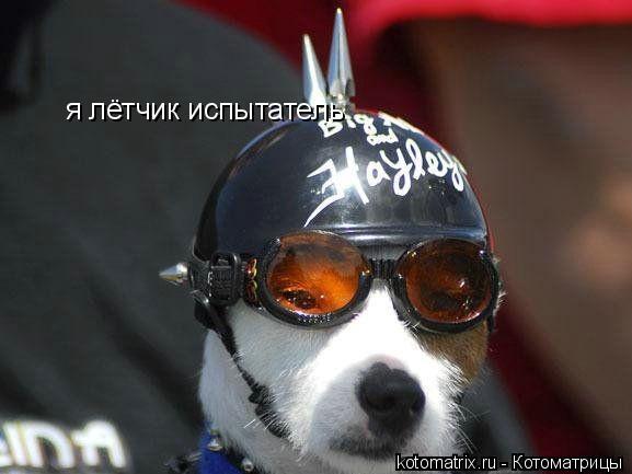 Котоматрица: я лётчик испытатель