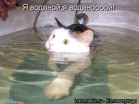 Котоматрица: Я водяной,я водяноооой!