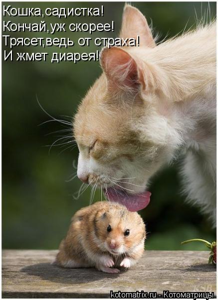 Котоматрица: Кошка,садистка! Кончай,уж скорее! Трясет,ведь от страха! И жмет диарея!