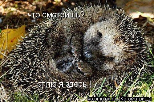 Котоматрица: сплю я здесь ! что смотришь?