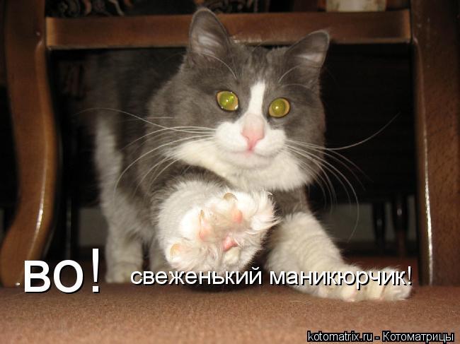Котоматрица: во! свеженький маникюрчик!