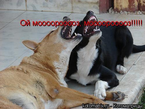 Котоматрица: Ой моооорооооз, моооорооооз!!!!!