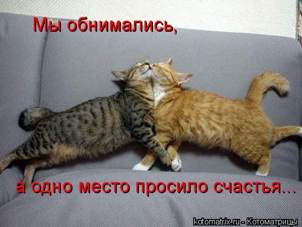 Котоматрица: Мы обнимались, а одно место просило счастья...