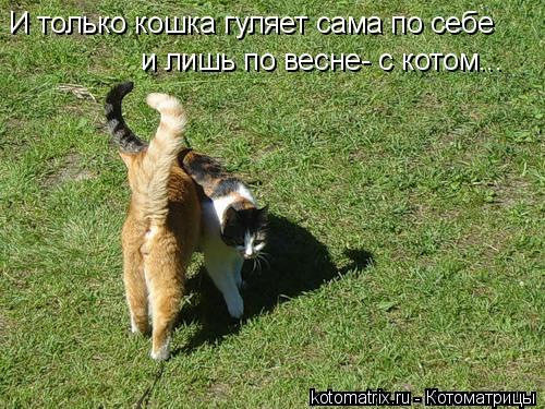 Котоматрица: И только кошка гуляет сама по себе и лишь по весне- с котом...