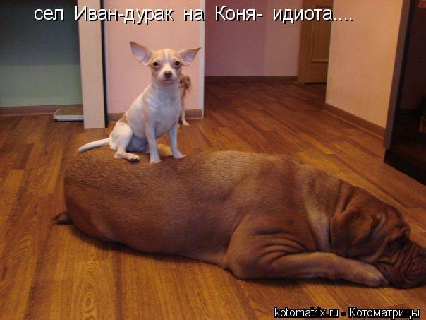 Котоматрица: сел  Иван-дурак  на  Коня-  идиота....