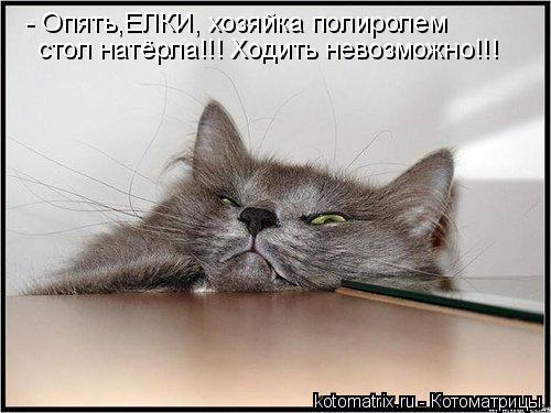 Котоматрица: - Опять,ЕЛКИ, хозяйка полиролем  стол натёрла!!! Ходить невозможно!!!