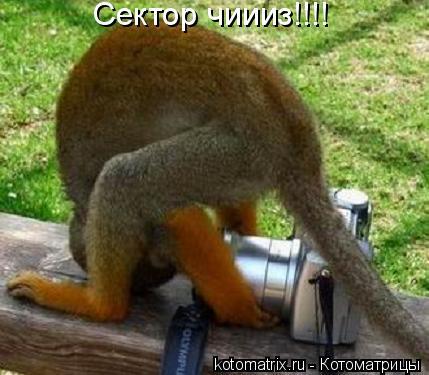 Котоматрица: Сектор чиииз!!!!