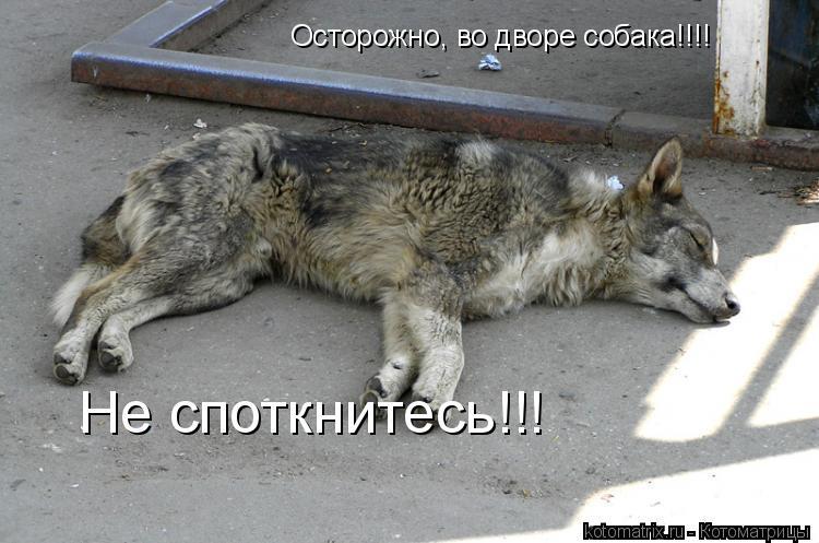 Котоматрица: Осторожно, во дворе собака!!!! Не споткнитесь!!!