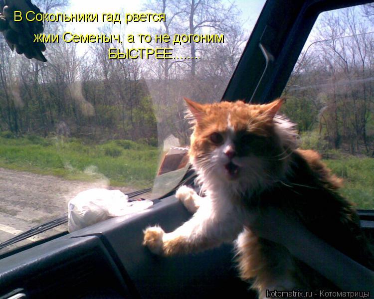 Котоматрица: жми Семеныч, а то не догоним В Сокольники гад рвется БЫСТРЕЕ........