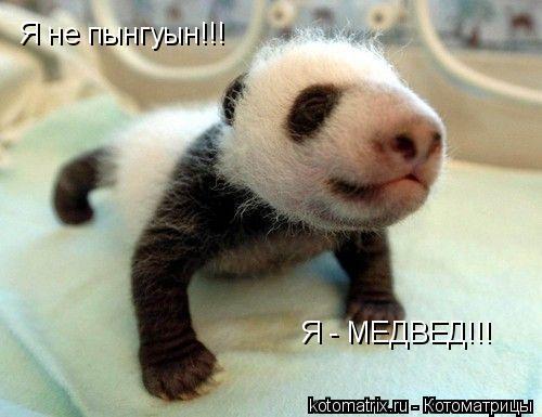 Котоматрица: Я не пынгуын!!! Я - МЕДВЕД!!!