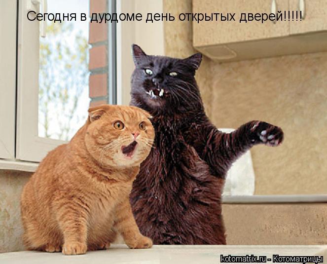 Котоматрица: Сегодня в дурдоме день открытых дверей!!!!!