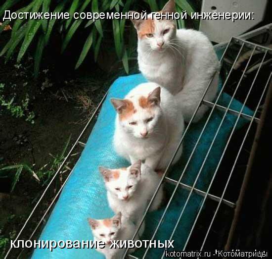 Котоматрица: Достижение современной генной инженерии: клонирование животных