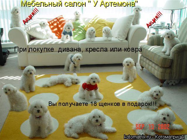 """Котоматрица: Мебельный салон """" У Артемона"""" При покупке  дивана, кресла или ковра  Вы получаете 18 щенков в подарок!!! Акция!!! Акция!!!"""