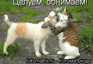 Котоматрица: Целуем, обнимаем!